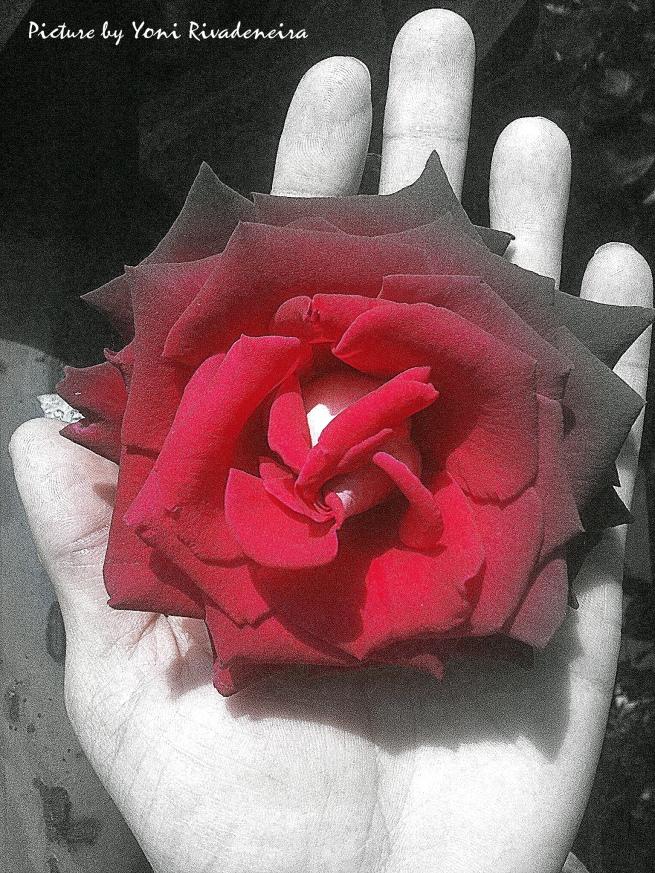La rosa seca by Yoni Rivadeneira for Tony Cantero Suárez