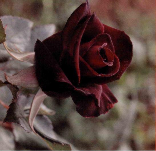 Y a la flor donde la dejan... by Vincent Tessier for Tony Cantero Suárez
