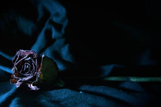 Y la flor donde la dejan... by Vincent Tessier for Tony Cantero Suárez