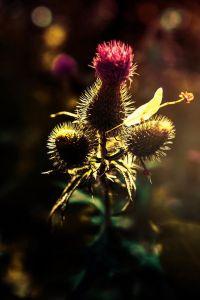 Buena luz by Ariel Arias