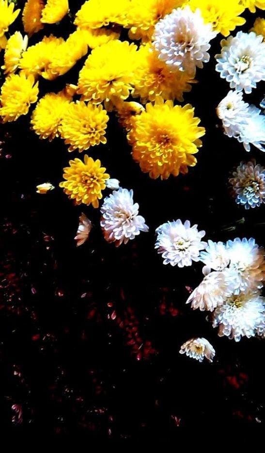Flores vivas by Tony Cantero Suárez