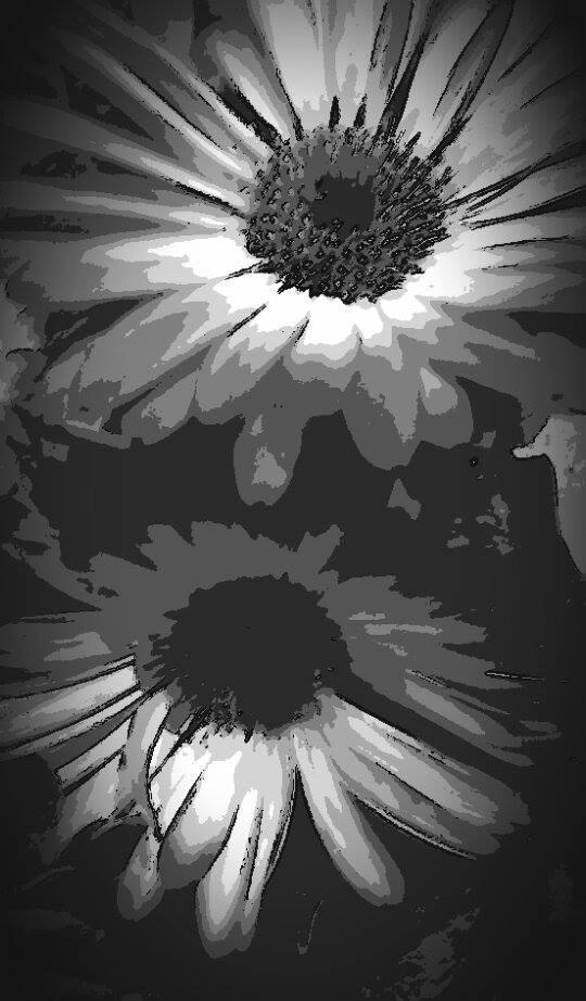 La flor de luz by Tony Cantero Suarez