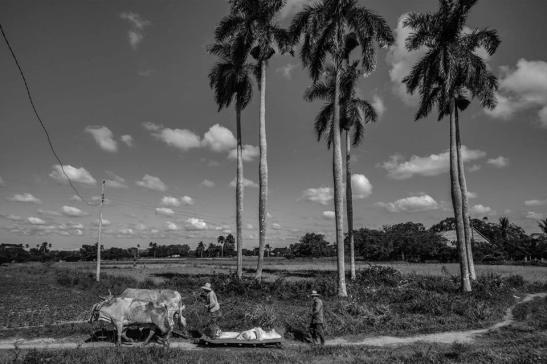 Campiña cubana — in San Juan y Martínez, Pinar del Rio by Ariel Arias