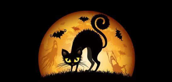 La gata y la luna