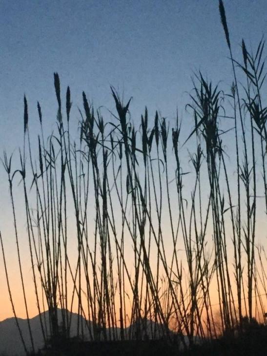 la hierba seca